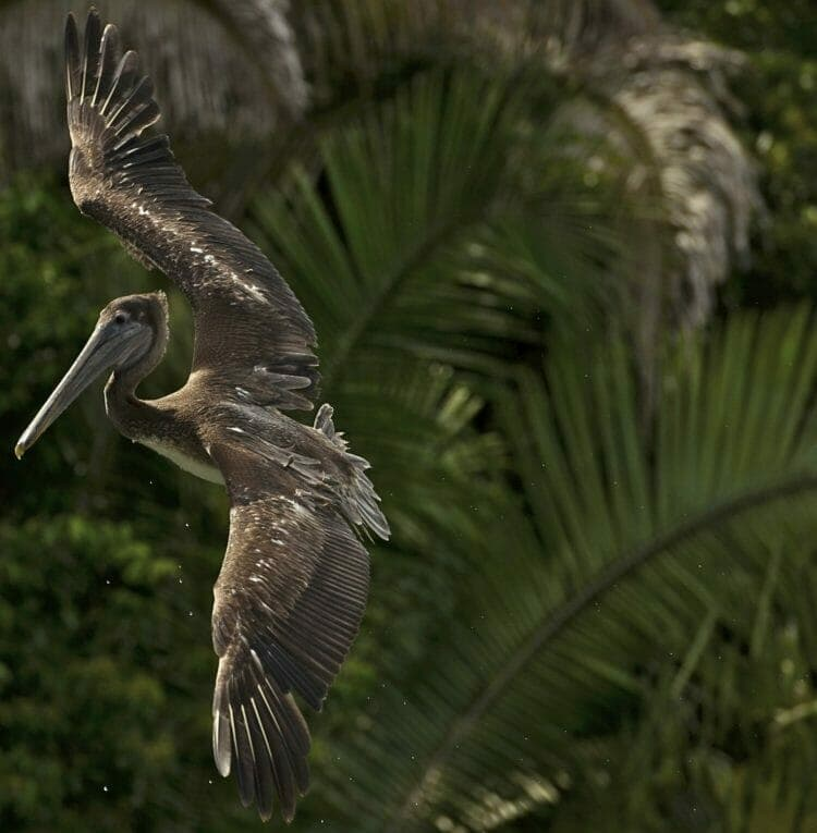 Photography tips: How to photograph birds in flight
