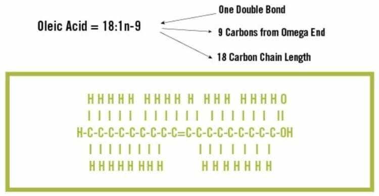 Molecular structure of Monounsaturated fatty acid (Credit: thepaleodiet.com)