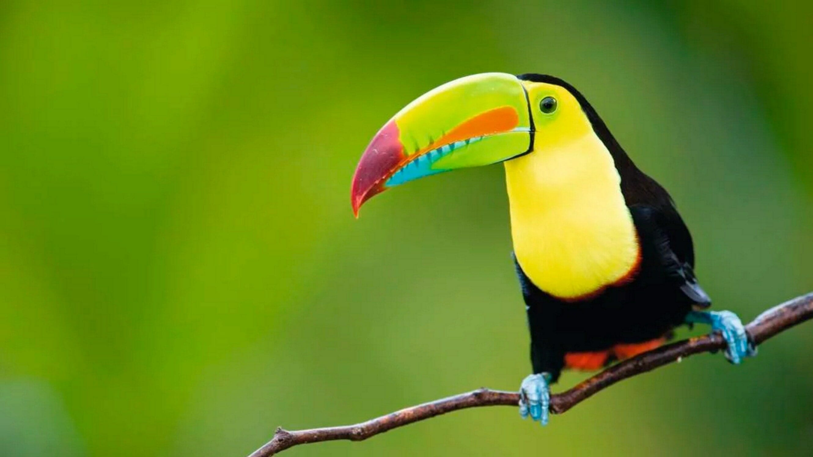Important - Travel permit for kids and minors in Costa Rica