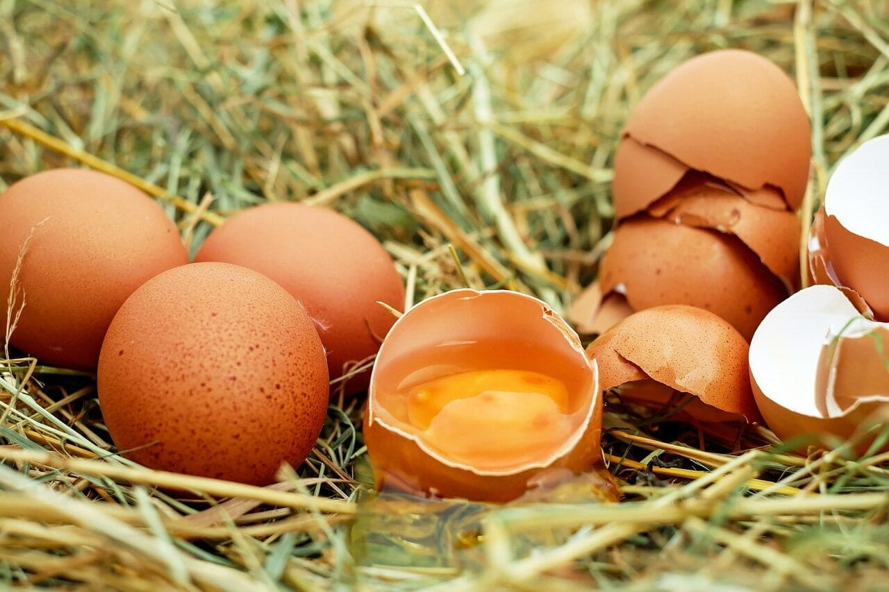 Nutritional value of Pastured eggs vs Regular eggs