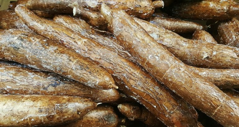 Yuca or Cassava Root