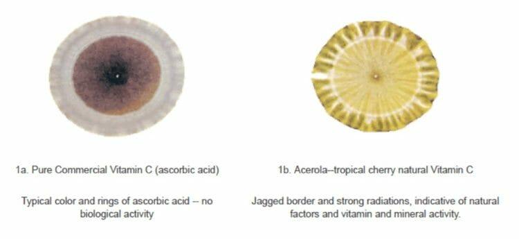 Synthetic vs. Natural Vitamin C