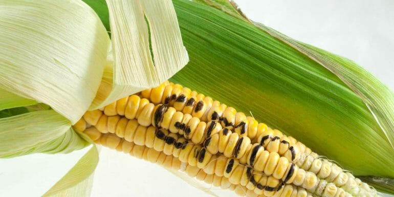 Erythritol is often made from modified corn starch