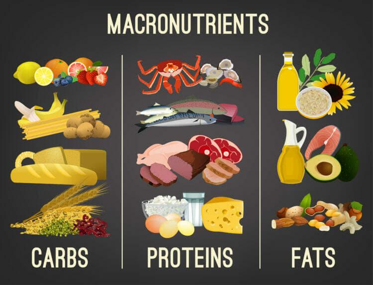 Macronutrients: Carbs, Proteins, Fats
