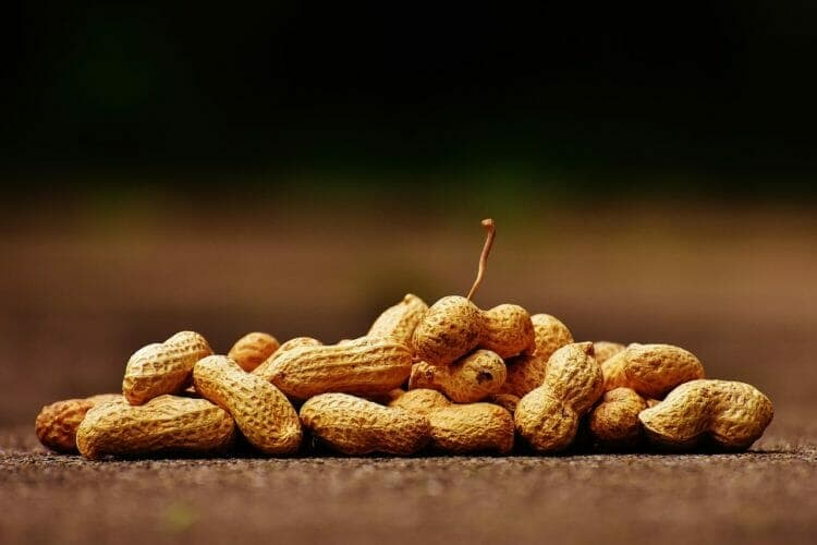 Peanuts are legumes and have anti-nutrients