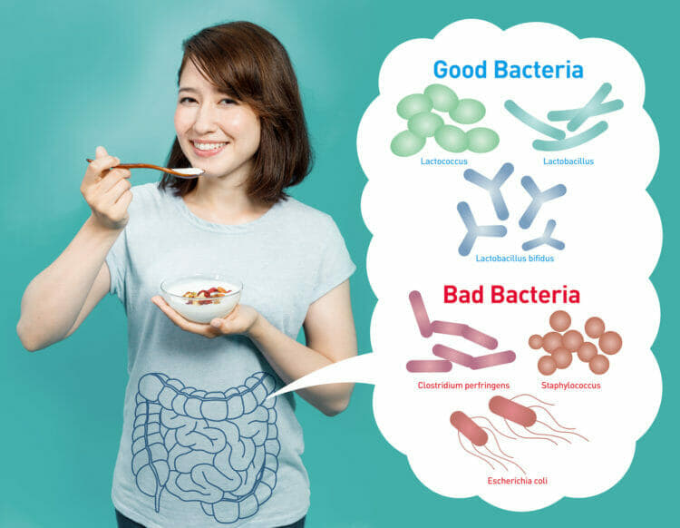 Good vs. Bad Bacteria - Help Your Body to Maintain The Balance