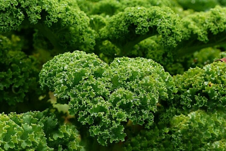 Some leafy-green vegetables have Oxalates