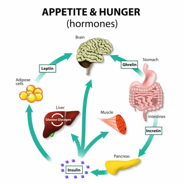 The ketogenic diet can help you control your appetite