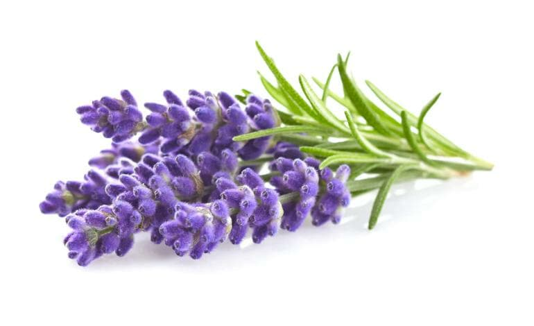 Lavender relaxes and might assist with falling asleep