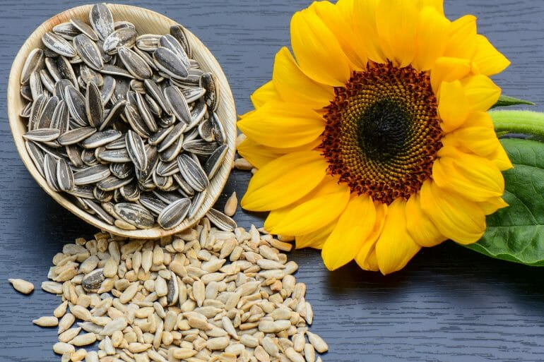 Sunflower protein powder is derived from sunflower seeds.