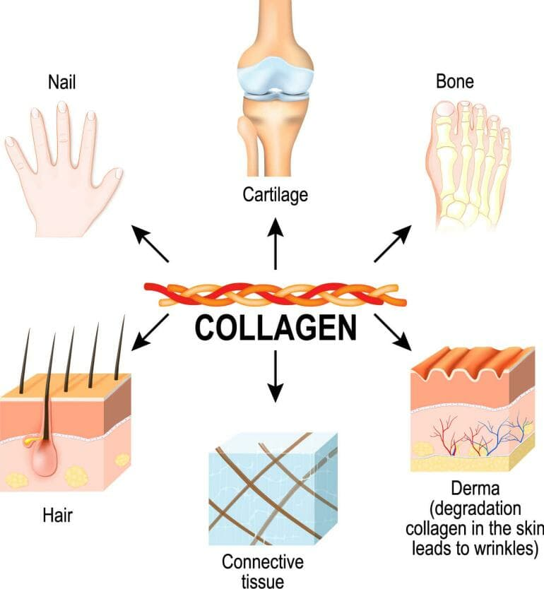 Collagen plays an important role in the body.
