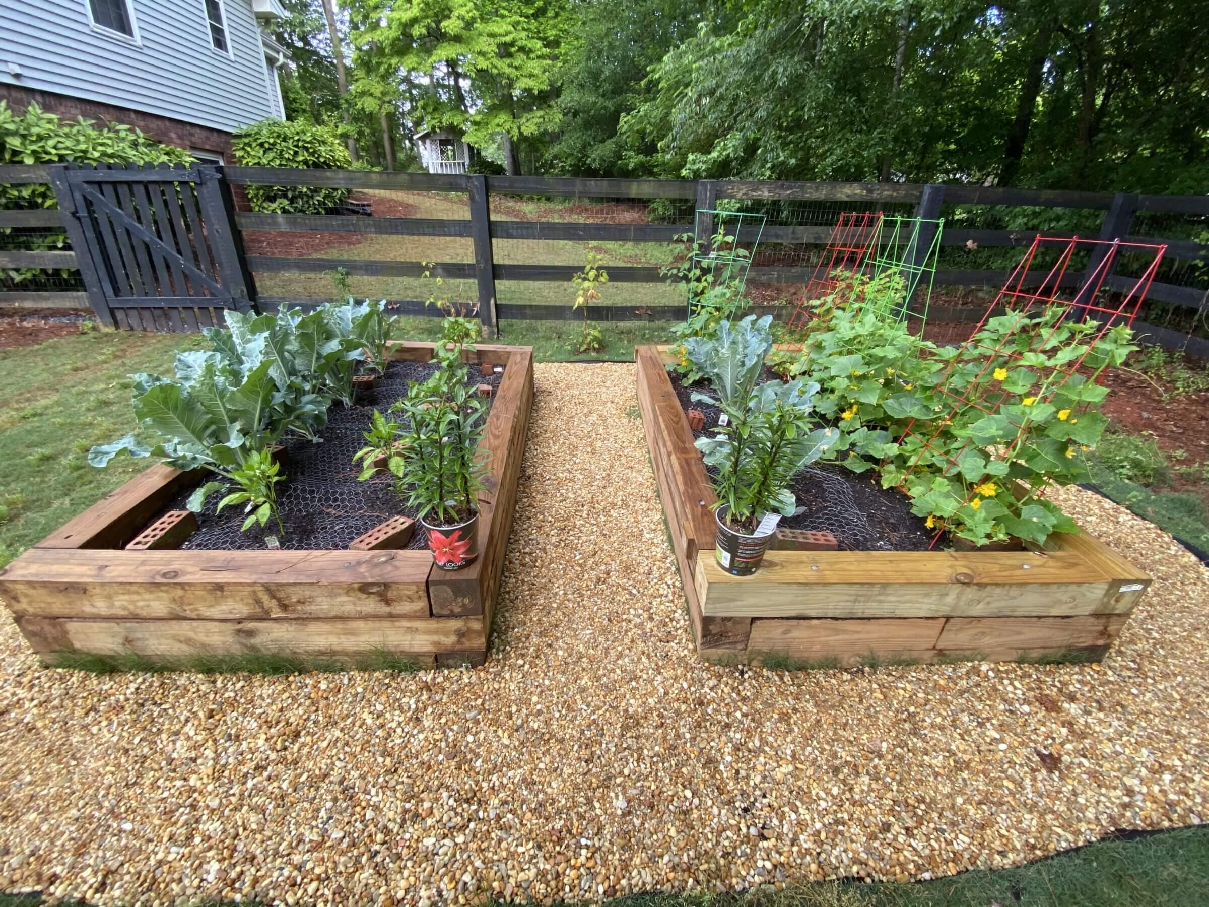 Our veggie garden
