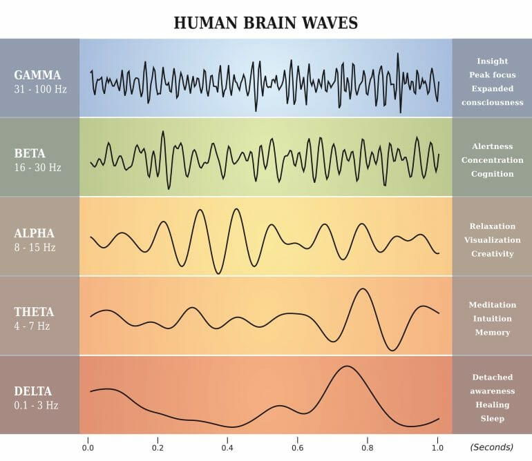 Brainwaves during different stages of sleep.