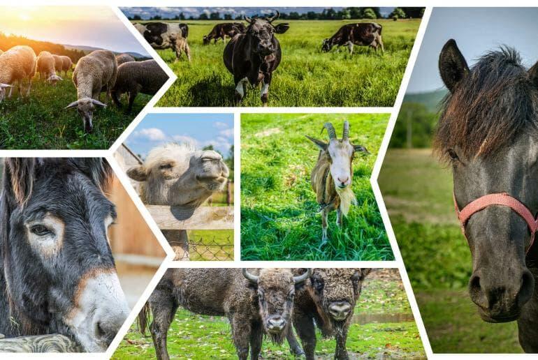 Camel milk vs. milk from other herbivores