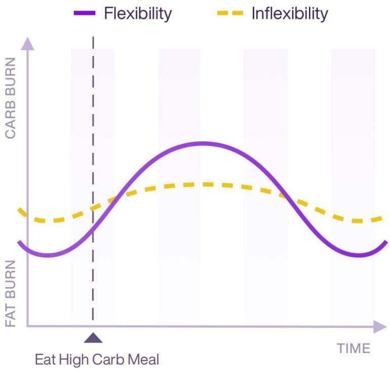 Lumen - Metabolic flexibility
