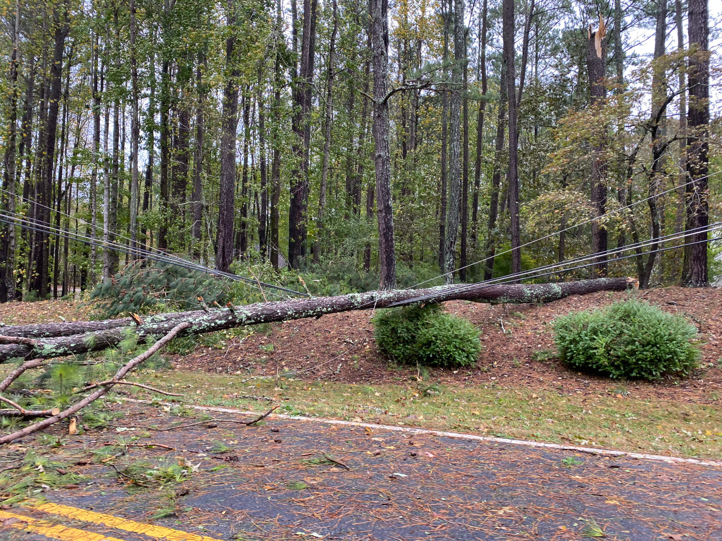 This tree caused a three-day power outage