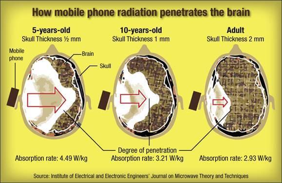 How mobile phone radiation penetrates the brain