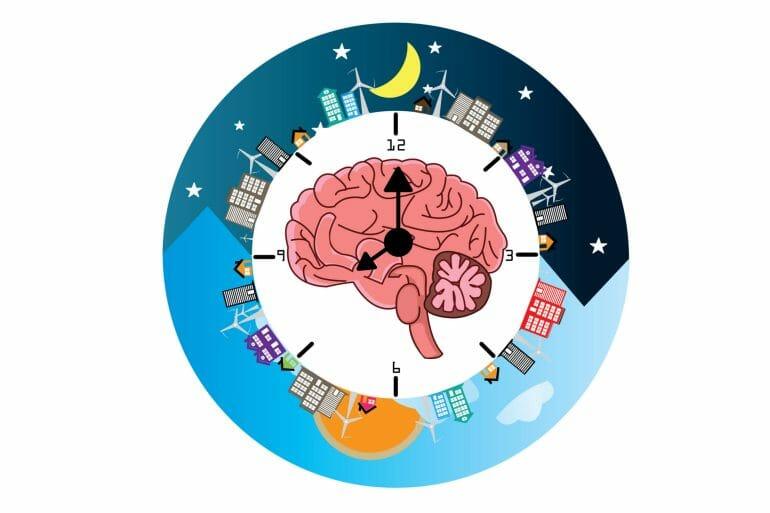 A graphical representation of the human circadian rhythm.